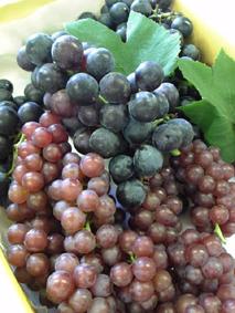 ぷりぷりしてます。すごくみずみずしそうな葡萄です